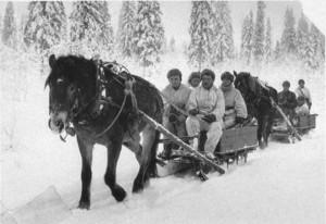 Hevoset_rintamalla