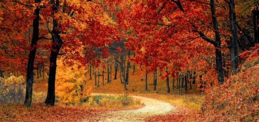 Tie ruskaisen metsän läpi.
