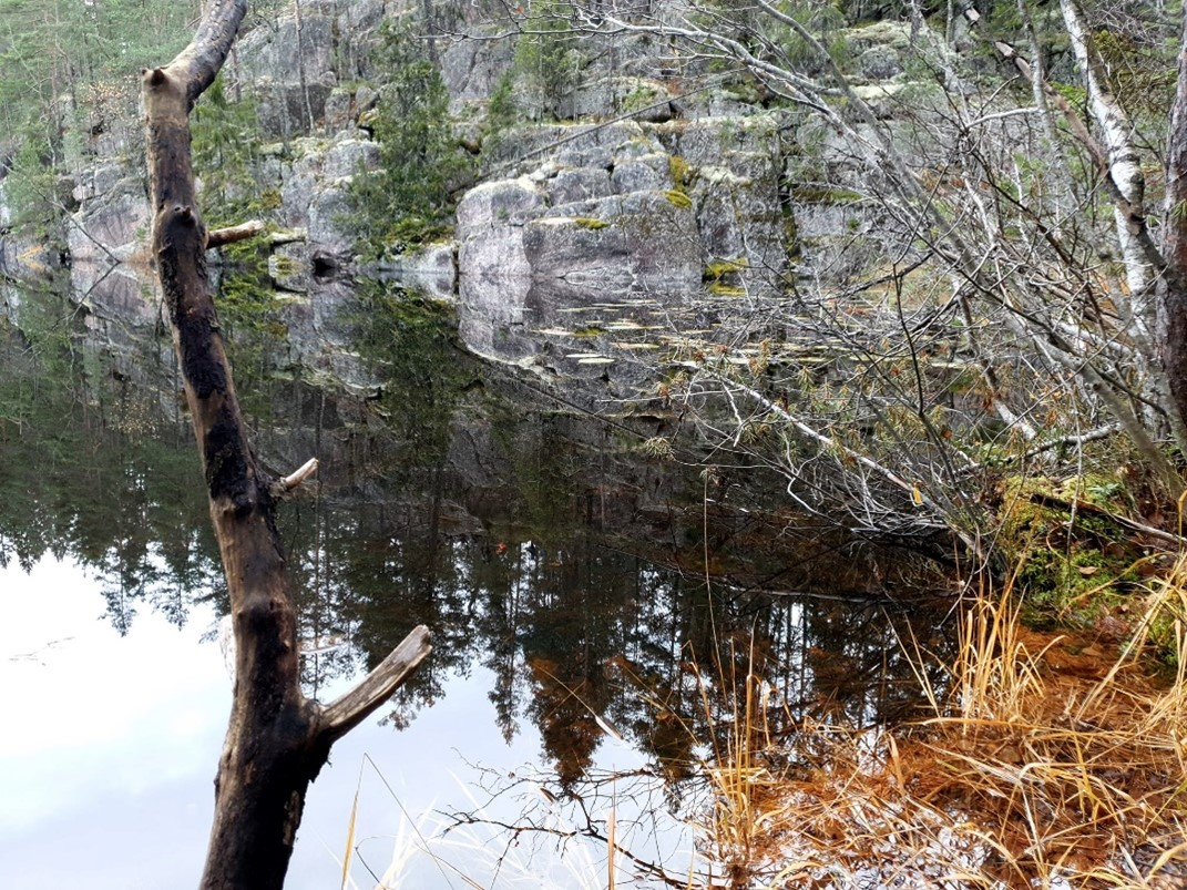 Pystyyn kuivunut puun runko veden äärellä.