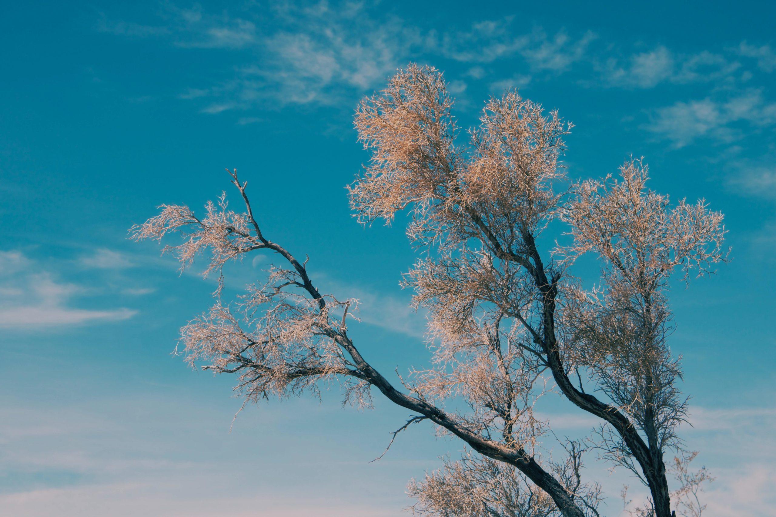 Puu ja sininen taivas