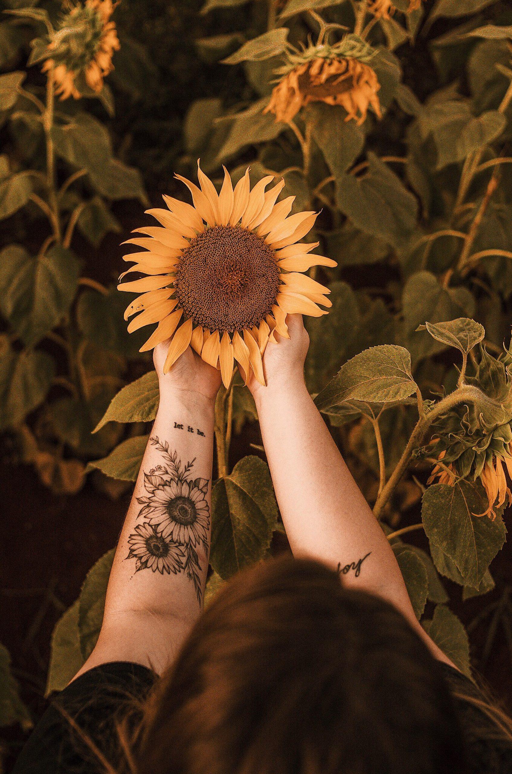Auringonkukka käsissä